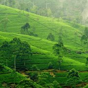 Best of Sri Lanka 1