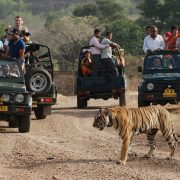 Wildlife Tour Operators in India